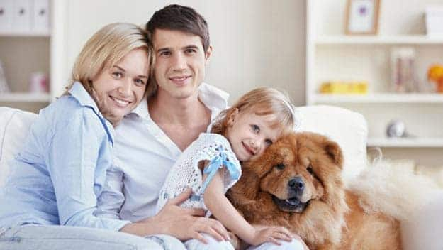 Wills & Trusts dog-young-family Direct Wills Ampthill